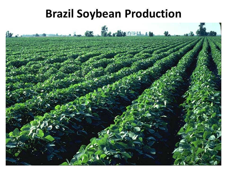 Proizvodnja soje u Brazilu, glavnog izvoznog proizvoda