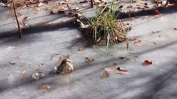 Foto: Shallote River Swamp Park, Facebook