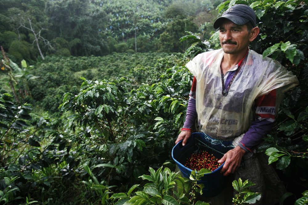 Foto: David Rochkind (plantaža kafe u Kolumbiji)
