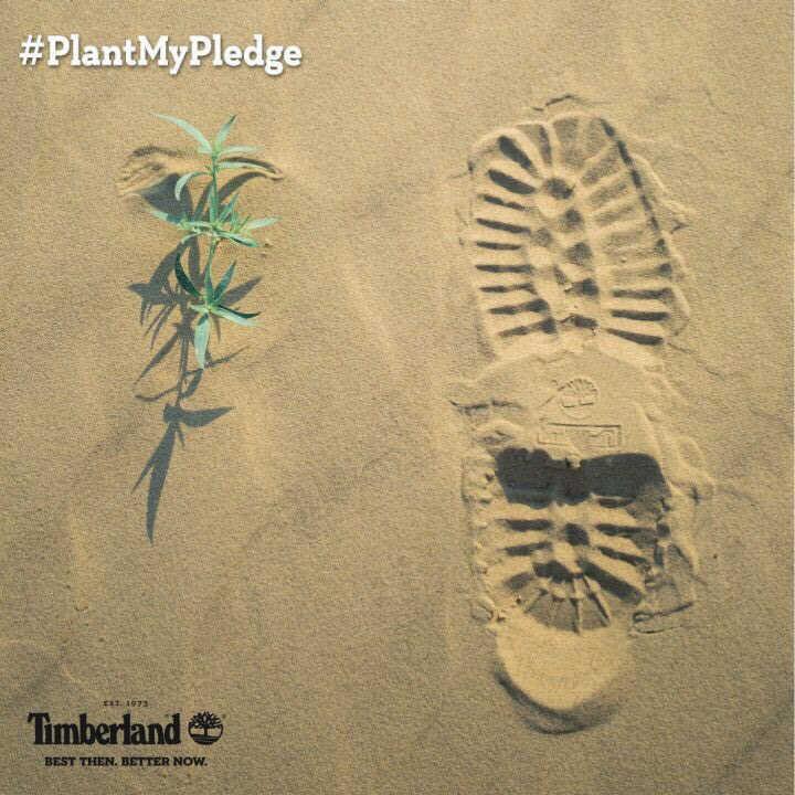 Timberlendova akcija pošumljavanja pustinjskih predela planete